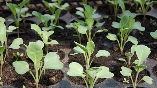 seedling-1386653-alex80-880x495