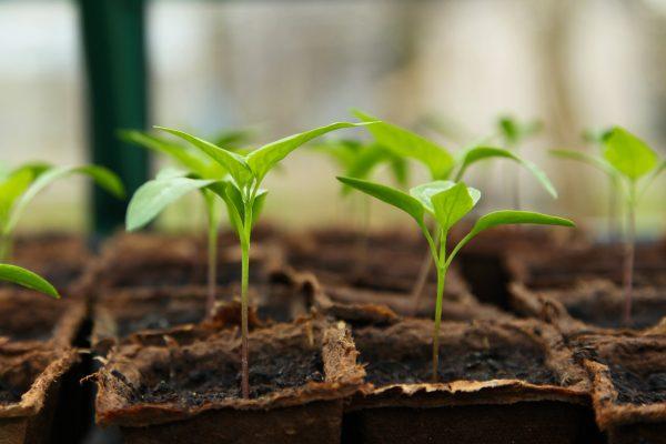 uzgoj zdravih presadnica u ekoloskoj poljoprivredi